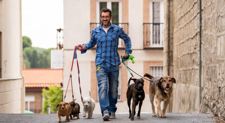 banner of Dog Walkers Can Help When You Can